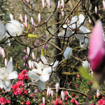 West Down Valley - Antony Woodland Garden
