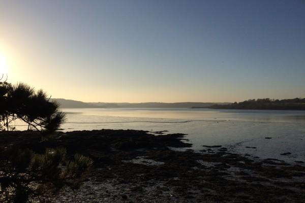 Lynher Estuary - Antony Woodland Garden