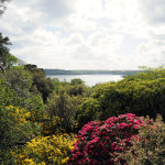 View over the tree tops - Antony Woodland Garden