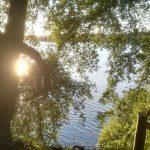Antony. Woodland Garden