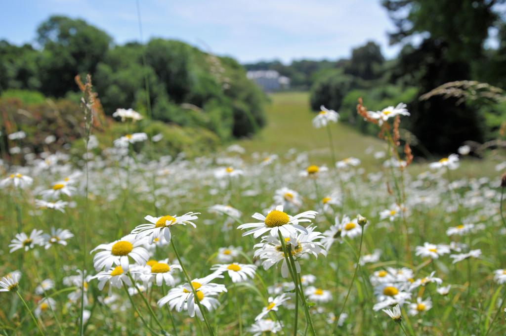 Antony Woodland Garden Blog