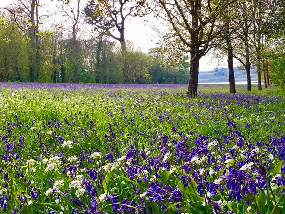 Visiting Antony Woodland Garden