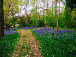 Create your own woodland garden